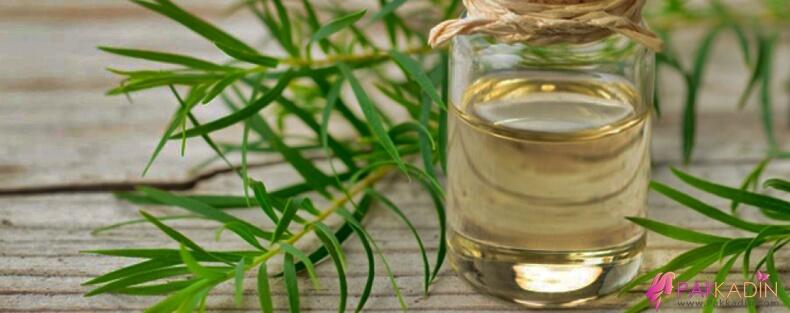 Tırnak Mantarı Çay Ağacı Yağı