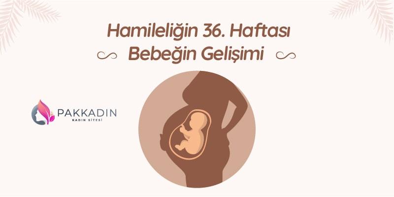 Hamileliğin 36. Haftası Bebeğin Gelişimi